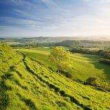 Het Landschap van Dorset Stock Afbeeldingen
