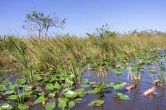 Het landschap van Florida Everglades Royalty-vrije Stock Fotografie