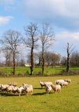 Het landschap van Frankrijk Stock Fotografie