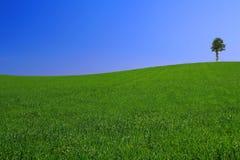 Het landschap van Gorgeus met eenzame boom #2 Stock Foto's