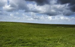 Het landschap van Gras Royalty-vrije Stock Foto's