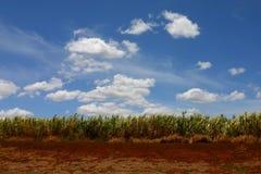 Het landschap van Haleakala Royalty-vrije Stock Fotografie