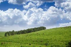 Het Landschap van het behang Stock Foto's
