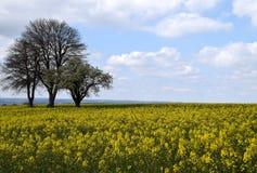 Het landschap van het Canolagebied Stock Afbeelding
