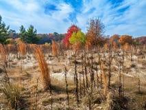 Het landschap van het de herfstgebied Stock Foto's