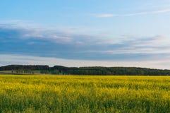 Het landschap van het de lenteplatteland met bloeiende verkrachting Stock Foto