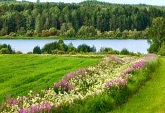 Het landschap van het de zomerland met bloemen, bos en rivier. Royalty-vrije Stock Afbeeldingen