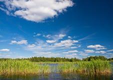 Het landschap van het de zomermeer met witte wolken in de blauwe hemel Riet, meer, wolken De zomerlandschap met bosmeer en blauwe Royalty-vrije Stock Foto