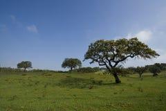 Het landschap van het gebied met bomen stock afbeelding