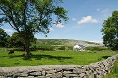 Het landschap van het het landbouwbedrijfhuis van het platteland Royalty-vrije Stock Foto's