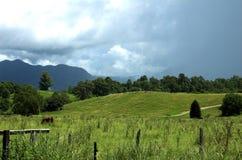 Het Landschap van het land stock foto