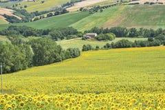 Het landschap van het land in Marsen (Italië) Stock Fotografie