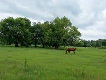 Het landschap van het land met een paard die op een gebied weiden stock foto