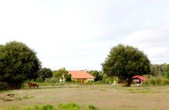 Het landschap van het land met een paard en huizen Stock Afbeelding