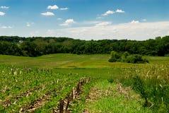 Het Landschap van het landbouwbedrijf Stock Foto