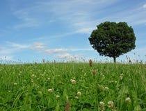 Het landschap van het landschap met solitaire boom Stock Foto