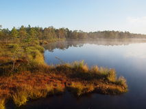 Het landschap van het moeras Royalty-vrije Stock Foto's