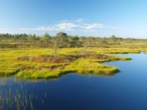 Het landschap van het moeras Stock Afbeelding