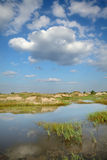 Het Landschap van het moeras Stock Foto