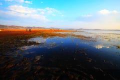 Het landschap van het moeras stock fotografie