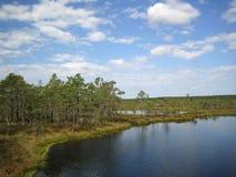 Het landschap van het moeras. Royalty-vrije Stock Afbeelding
