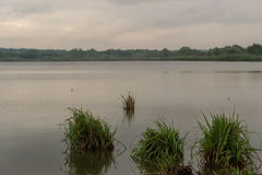 Het landschap van het ochtendland bij het meer met een het groeien riet Stock Fotografie