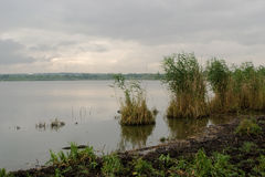 Het landschap van het ochtendland bij het meer met een het groeien riet Royalty-vrije Stock Foto's