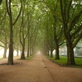 Het landschap van het park royalty-vrije stock afbeeldingen