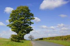 Het landschap van het platteland Stock Foto