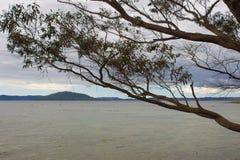Het landschap van het Rotoruameer Royalty-vrije Stock Afbeeldingen