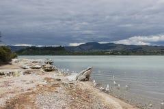 Het landschap van het Rotoruameer Royalty-vrije Stock Foto