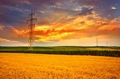 Het landschap van het tarwegebied in zonsonderganglicht Stock Foto's