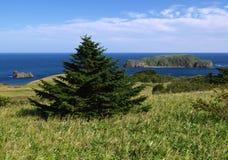 Het landschap van het Verre Oosten Royalty-vrije Stock Afbeeldingen