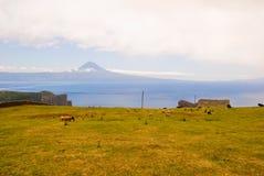 Het landschap van het weiland met erachter berg Pico Royalty-vrije Stock Afbeeldingen
