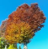 Het landschap van hout tijdens het de herfstseizoen met waarschuwt kleuren royalty-vrije stock afbeeldingen