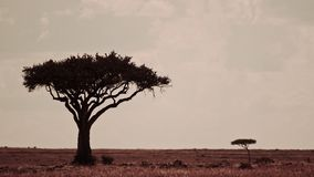 Het landschap van Kenia met twee bomen, Masai mara Stock Afbeeldingen