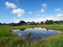 Het landschap van kweekt installatiegewassen en van aquicultuur natuurlijke vissen vijvers royalty-vrije stock foto