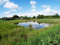 Het landschap van kweekt installatiegewassen en van aquicultuur natuurlijke vissen vijvers royalty-vrije stock fotografie