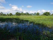 Het landschap van kweekt installatiegewassen en van aquicultuur natuurlijke vissen vijvers stock afbeelding