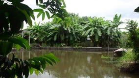 Het landschap van kweekt installatiegewassen en van aquicultuur natuurlijke vissen vijvers stock videobeelden