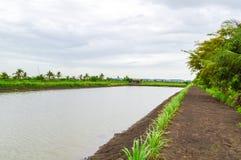 Het landschap van het land in Chachoengsao Thailand Stock Fotografie