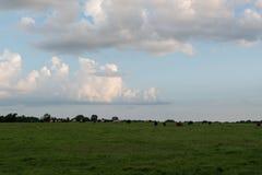Het landschap van het land van vee in de afstand royalty-vrije stock afbeeldingen