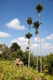 Het landschap van Lombok Royalty-vrije Stock Afbeelding