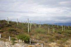 Het landschap van Mexico stock fotografie