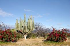 Het landschap van Mexico royalty-vrije stock fotografie