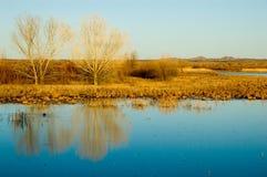 Het Landschap van New Mexico Royalty-vrije Stock Foto's