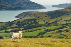 Het landschap van Nieuw Zeeland Royalty-vrije Stock Foto's