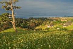 Het landschap van Nieuw Zeeland met boom, Whangaparaoa Royalty-vrije Stock Afbeelding