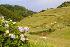 Het landschap van Pastrue, Sao Jorge Stock Afbeeldingen