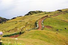 Het landschap van Pastrue, Sao Jorge Stock Foto